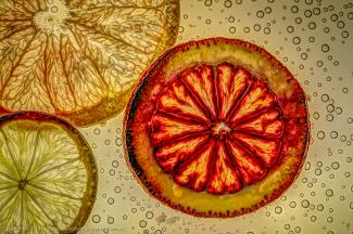 Thin Citrus Slices floated in tonic water on light box